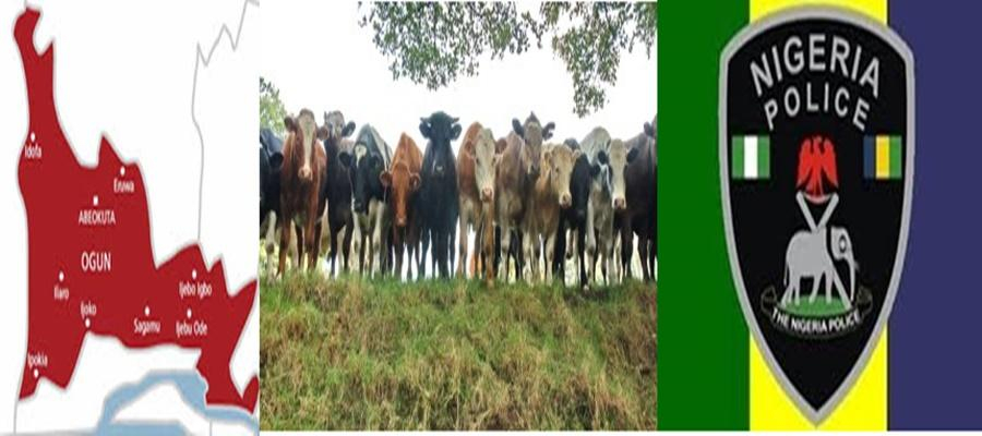 Police Arrest Suspected Cattle Rustlers In Ogun